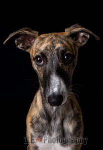 Pet Photography Penryn,